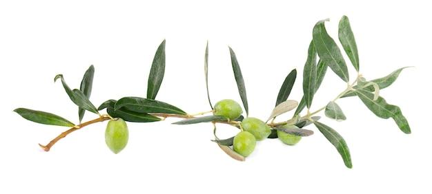 Olijftak geïsoleerd op witte achtergrond groene olijven met bladeren