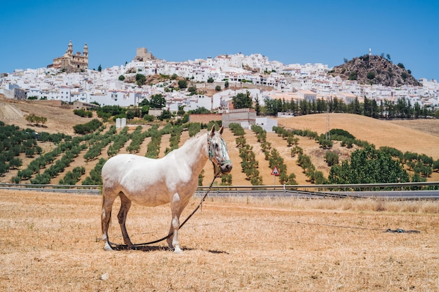 Olvera in andalusië