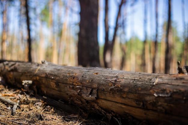 Omgevallen boom in het bos. bos landschap concept.