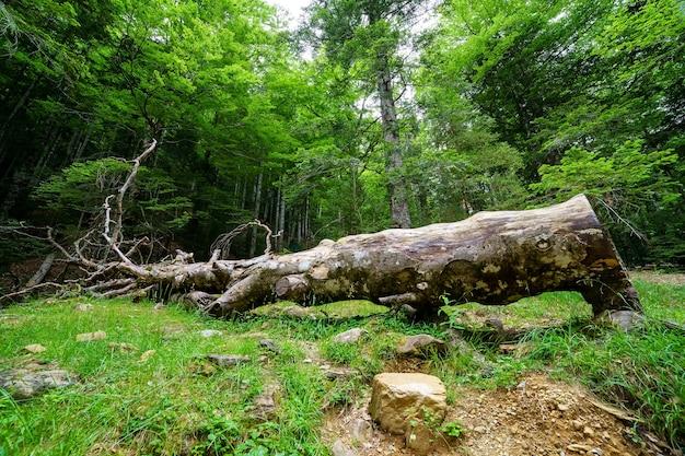Omgevallen boomstam op de grond midden in het groene bos.
