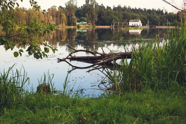 Omgevallen dode boom in het water met de weerspiegeling van de lucht en takken aan de kust