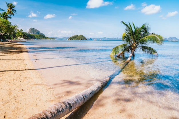 Omgevallen palmboom op zandstrand corong beach, el nido, palawan, filippijnen