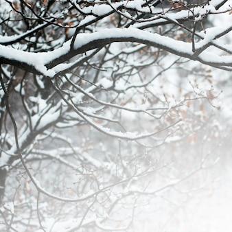Omheining grijze doornen besneeuwde prikkeldraad
