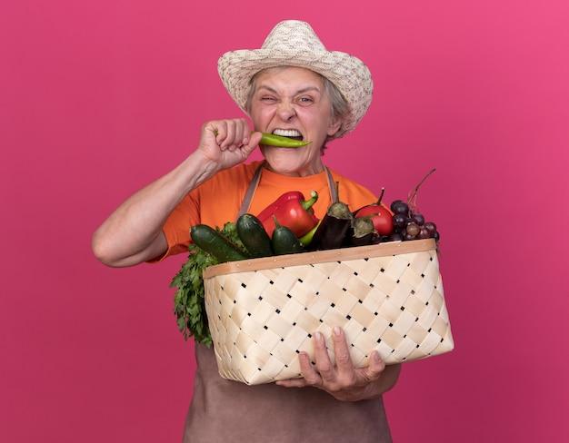 Onaangename oudere vrouwelijke tuinman die tuinierende hoed draagt die groentemand houdt en doet alsof hij hete peper op roze bijt