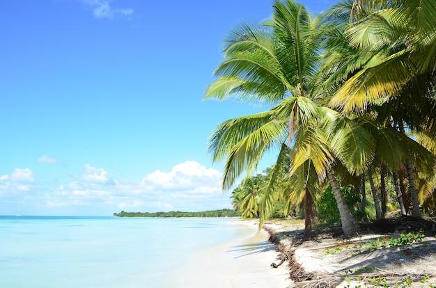 Onaangetast tropisch strand in dominicana.