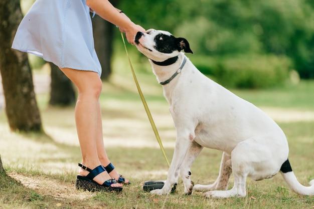Onbekend meisje in blauwe jurk veel plezier en spelen met haar mannelijke witte hond buiten in de natuur.