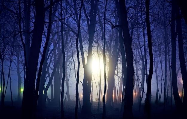 Onbekende lichten en nacht in het bos