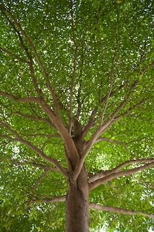 Onder de boom.
