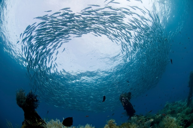 Onder de indische oceaan op de malediven