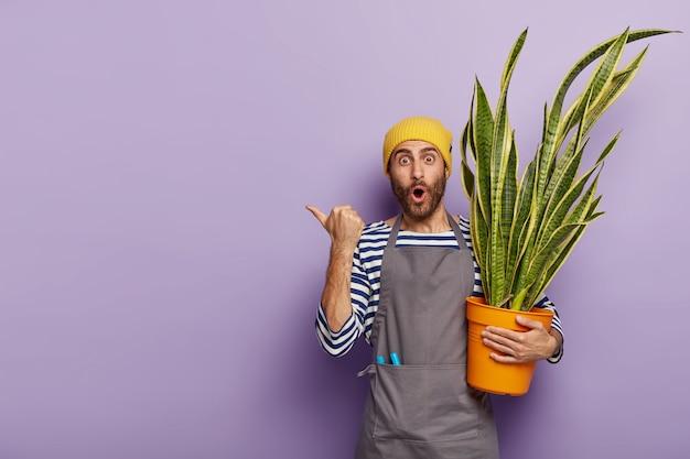 Onder de indruk ongeschoren bloementuinman draagt pot met mooie schoonmoeder tong plant