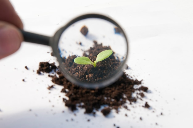 Onder een vergrootglas groeit een spruit uit een stapel zwarte aarde op een witte achtergrond.