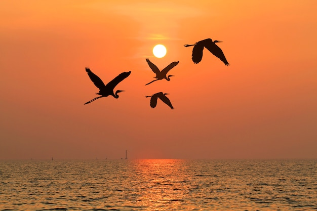 Onder het concept van goed leiderschap of teamwork, zoals vogels vliegen door de zonsondergang