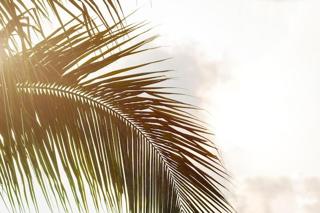 Onderaanzicht bladeren van kokosnoot palmboom