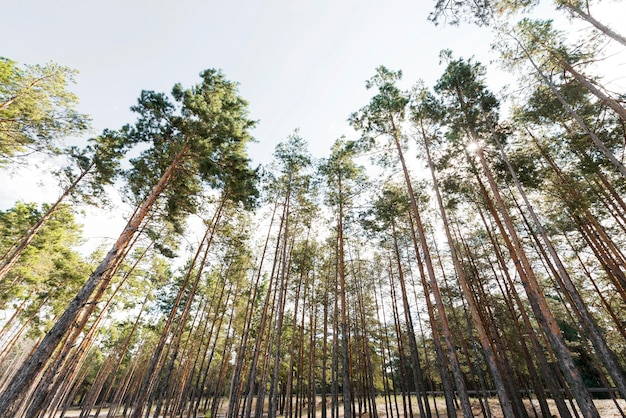 Onderaanzicht bomen bij daglicht