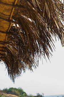 Onderaanzicht dak van bladeren van kokosnoot palmboom