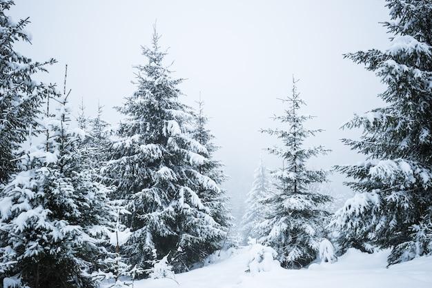 Onderaanzicht hoge majestueuze sparren bedekt met sneeuw staan in een bos tegen een mistige blauwe lucht