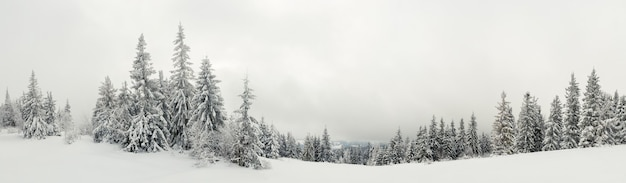 Onderaanzicht hoge prachtige majestueuze sparren bedekt met sneeuw staan in een bos tegen een mistige blauwe hemel bewolkte ijzige winterdag.