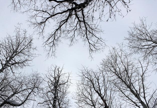 Onderaanzicht op de toppen van de bomen in het winterbos op bewolkte hemel als achtergrond