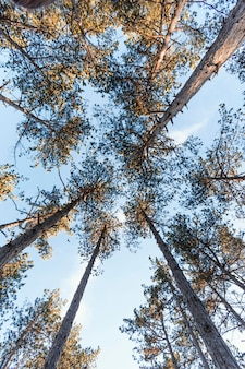 Onderaanzicht van bosbomen