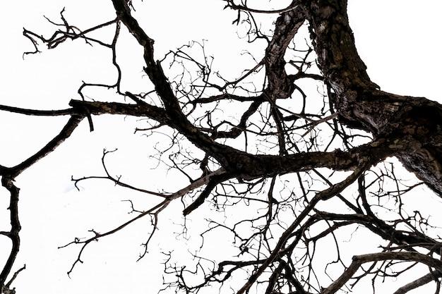 Onderaanzicht van dode boom en ongeorganiseerde takken geïsoleerd op een witte achtergrond. dood, hopeloos, wanhoop, verdrietig en weeklagen concept. halloween dag achtergrond.