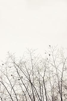 Onderste framecontouren van kale takken van herfstbomen zonder bladeren op witte uitknipachtergrond
