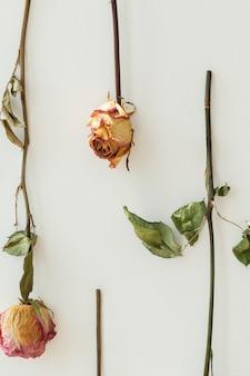 Ondersteboven rozen op een muur