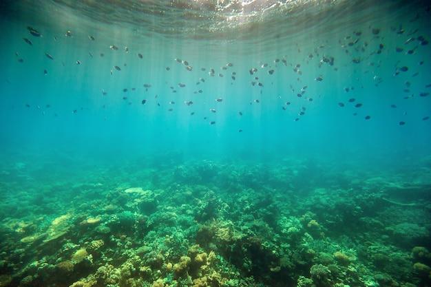 Onderwater koraalrif aan de rode zee