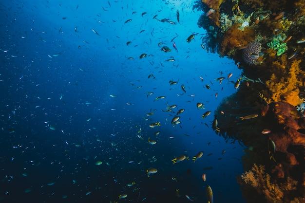 Onderwater leven met mooie koralen en veel gekleurde vis