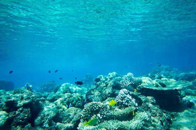 Onderwater wereldlandschap