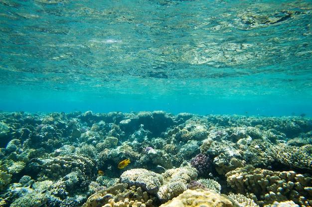 Onderwater wereldpanorama. koraalrif oceaanlicht onder water