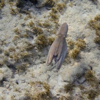 Onderwatermening van een octopus, utila, baai-eilanden, honduras
