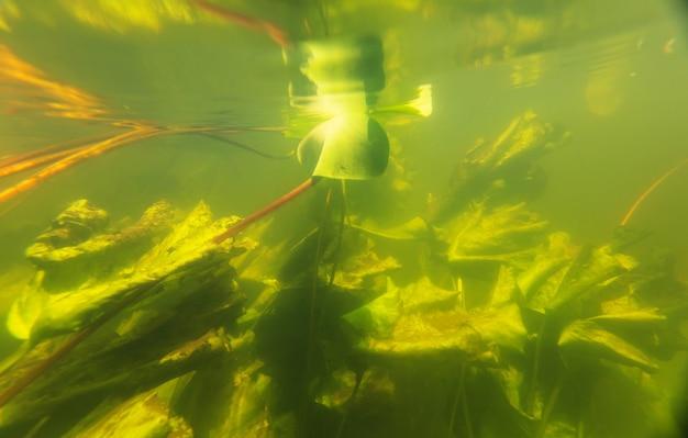 Onderwaterscène in de zomerrivier