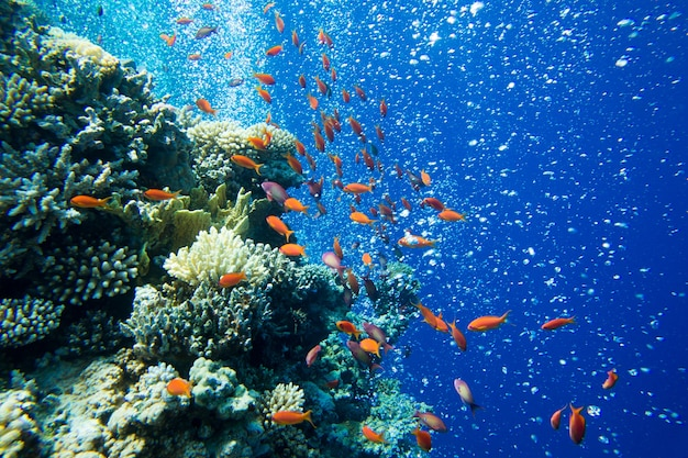 Onderwaterscène met exemplaarruimte