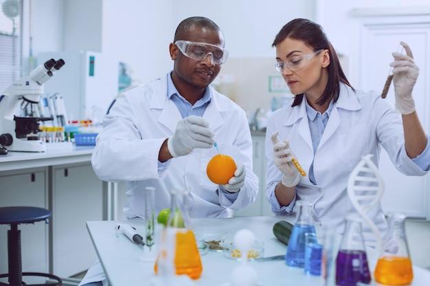 Onderzoek afronden. geconcentreerde professionele wetenschappers die in het laboratorium werken en fruit modificeren