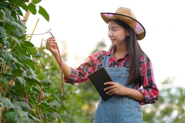 Onderzoeker of boer inspecteren maïs op zijn veld