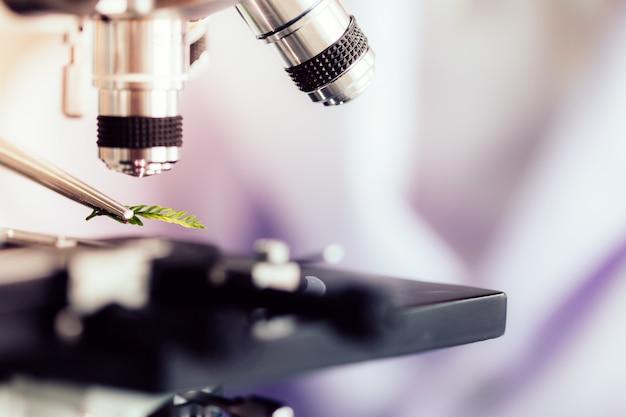 Onderzoekers bestuderen plantensoorten