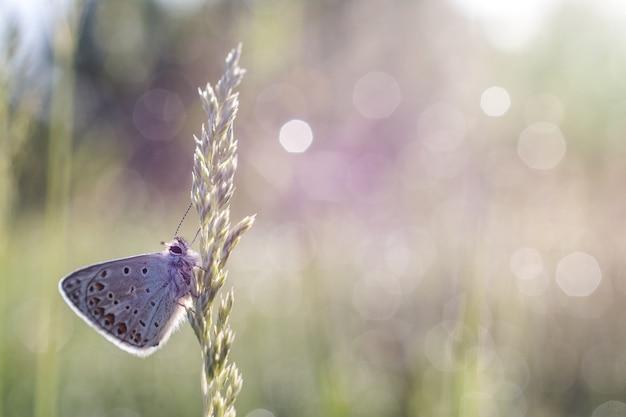 Ondiepe focus close-up shot van een vlinder op een plant
