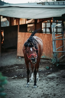 Ondiepe focus verticale shot van een bruin paard met een rood harnas