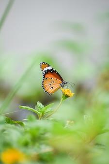 Ondiepe focusopname van een oranje vlinder op een gele bloem