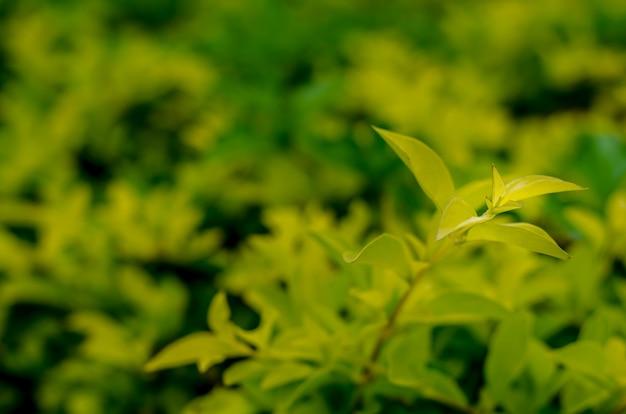 Onduidelijk beeld groen blad op humeurige achtergrond