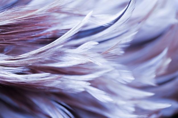 Onduidelijk beeldstyl en zachte kleur van de textuur van de kippenveer voor achtergrond