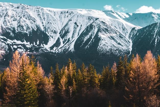 Ongelooflijk landschap met bomen op de achtergrond van snow-covered pieken van de bergen altai