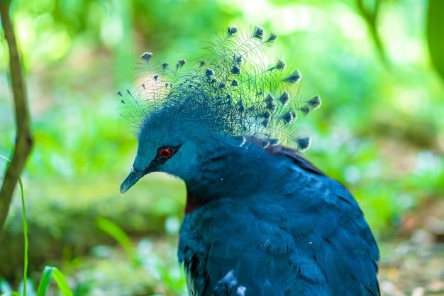 Ongewone gekroonde duif in een groen park. schoonheid van de natuur. vogels kijken