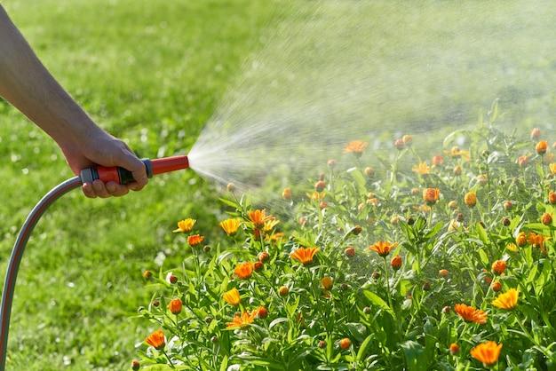Onherkenbaar persoon geeft bloemen en planten water met een slang in de eigen tuin
