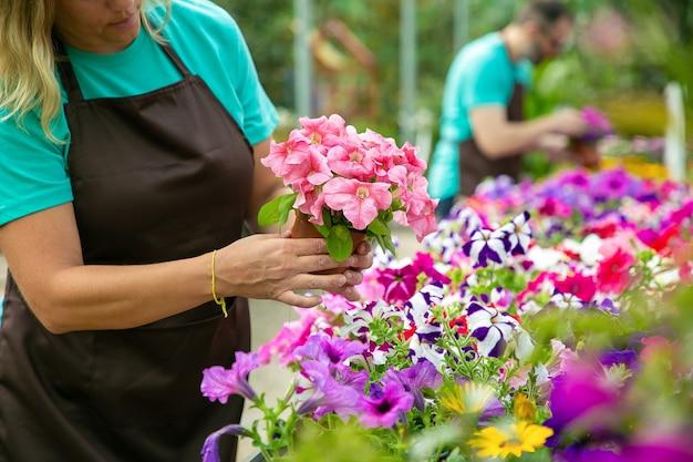 Onherkenbare blonde vrouw die bloeiende bloemen in pot controleert. professionele tuinders in schorten werken met bloeiende planten in kas. selectieve aandacht. tuinieren activiteit en zomer concept