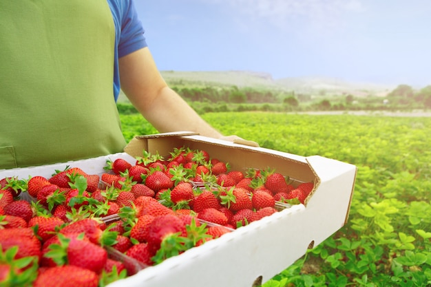 Onherkenbare man die een doos met verse rijpe aardbeien in een depot