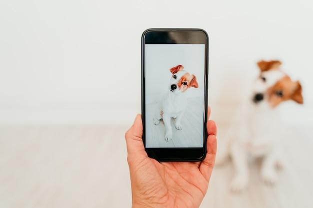 Onherkenbare vrouw die een foto met mobiele telefoon van de leuke hond van jack russell thuis nemen. technologie en huisdieren concept