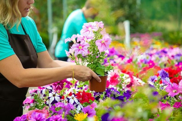 Onherkenbare vrouw met bloempot in tuin of kas. twee professionele tuinmannen in schorten die met bloeiende bloemen in potten werken. selectieve aandacht. tuinieren activiteit en zomer concept