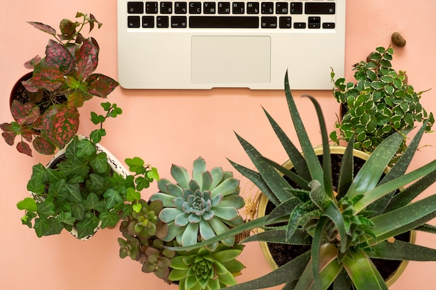 Online aankopen op afstand van tuinplanten en -apparatuur. een comfortabele stijlvolle freelancer's werkplek met laptop en kamerplanten vetplanten.