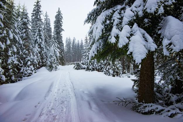 Onoverbrugbare besneeuwde winter bosweg tussen hoge sparren op een bewolkte ijzige dag